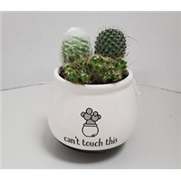 4_in_Cant_Touch_This_Cactus_Pot_-_19.99