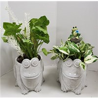 8_in_Cement_Frog_Planter_with_Frog_Pick_or_Silks_-_24.99