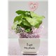 5_in_I_Wet_My_Plants_Planter_with_LOVE_Pick_-_19.99